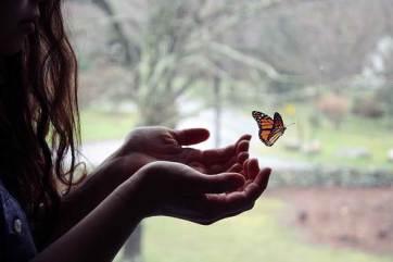 tumblr_static_butterfly_tumblr_ldoj98y0yy1qe5n1ro1_500_large